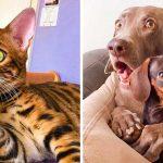 21 смешни снимки на животни, които се държат като хора