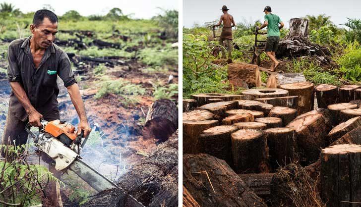 Обезлесяването ни води към свят без гори, в който животните няма да могат да оцелеят