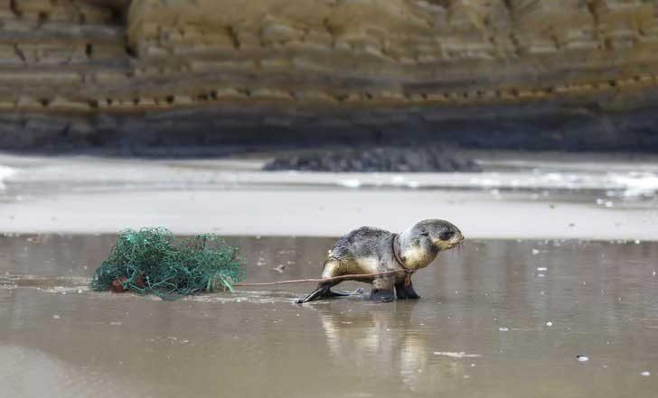 Хиляди животни се хранят или заплитат в отпадъците, които произвеждаме и които по-късно се озовават в морето