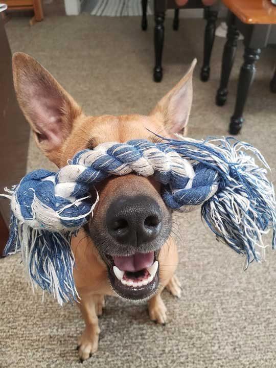 """""""Така моето куче играе на криеница"""""""
