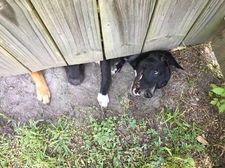 """""""Още не съм виждал новата съседка, но кучето ѝ определено ме харесва"""""""