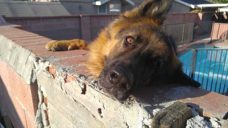 """""""Кучето на съседите обича да подпира глава на оградата и да гледа замечтано към двора ми"""""""