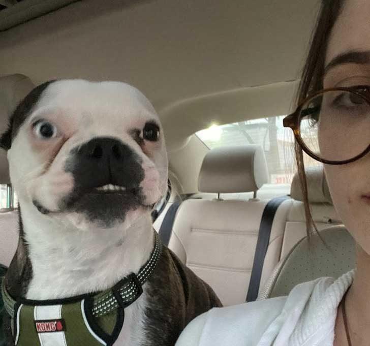 """""""Кучето ми Оливър, най-отегченото куче по принцип, се опитва да даде изкуствена усмивка за снимката"""""""