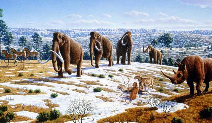 От къде идват някои създания?