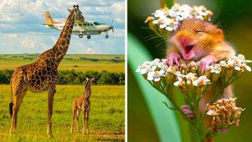 15+ весели снимки, които ще те усмихнат