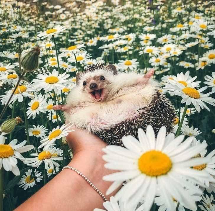 """""""Виж колко много цветя!"""""""