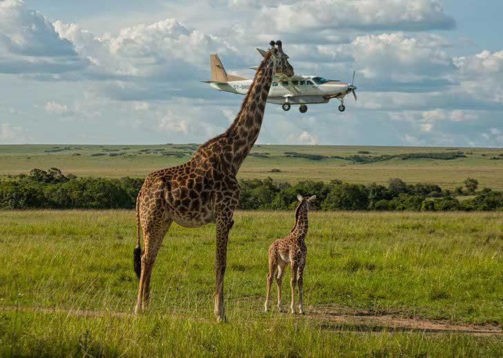 """""""Трябва да отбележа, че този самолет е доста вкусен"""""""