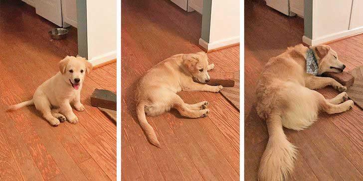 """""""Най-добрият приятел на моето куче е... Тухла..."""""""
