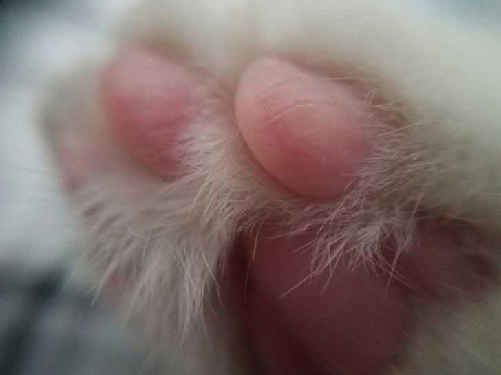 Макро фотография на котешка лапичка