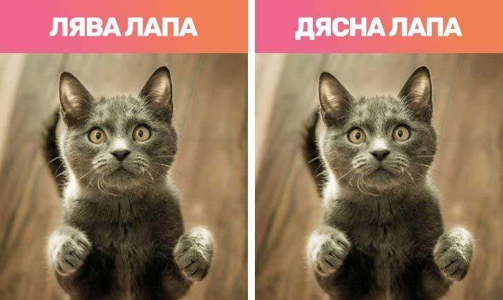 Котките са левичари и десничари