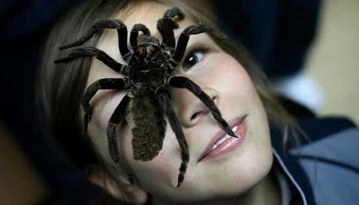 По-вероятно е да видиш паяк, ако те е страх от тях