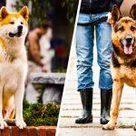 Топ 15 на най-лоялните породи кучета