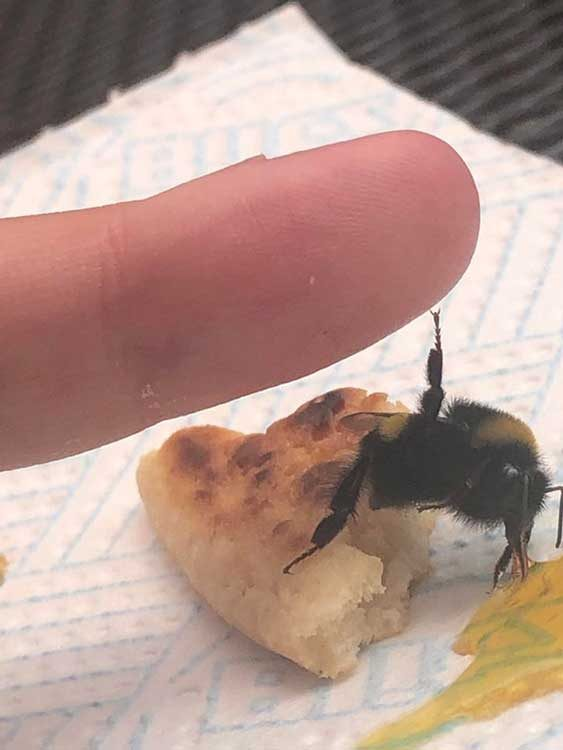 """""""Видях тази пчела, изтощена от слънцето и ѝ дадох малко от моята палачинка и захарен сироп. Сега тя ми дава пет за поздрав"""""""