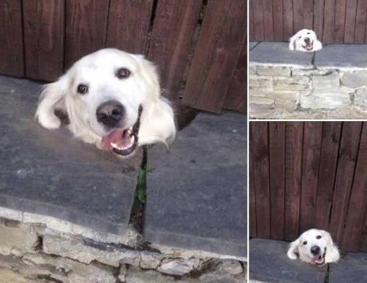 """""""Всеки ден това куче прокарва глава под оградата, за да поздави децата, докато отиват на училище"""""""