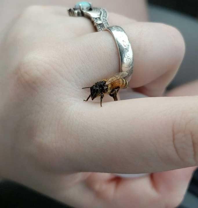 """""""Открих тази мокра пчела на паркинга. Тя застана на пръста ми и не пожела да слезе, когато се опитах да я оставя на близкото дърво. Стоя така, докато не изсъхна и тогава отлетя. Кръстих я Прасковка"""""""