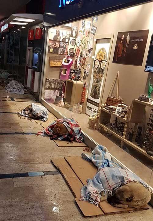 Собственик на мол в Турция пуска бездомните кучета да спят вътре по време на снежна буря