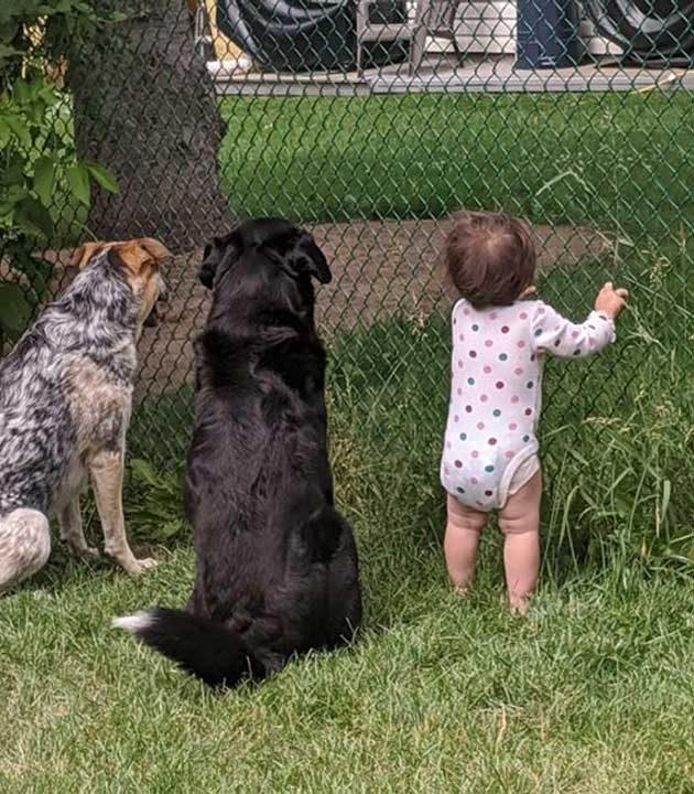 """""""Съседът ни раздава лакомства през оградата"""""""