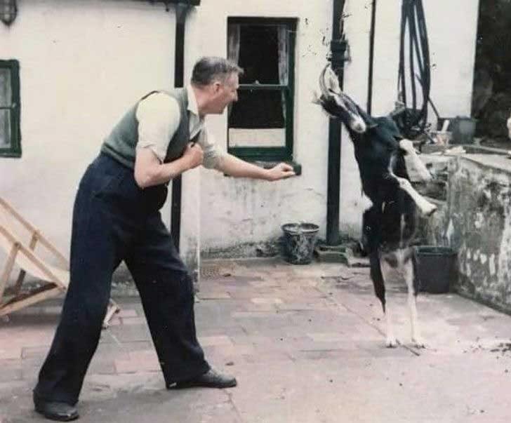 """""""Дядо ми и неговата коза Сара по време на ежедневния им боксов мач"""""""
