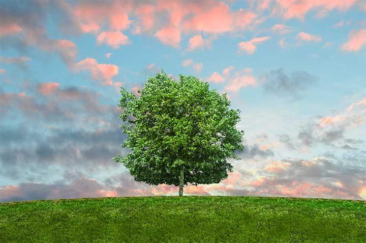 Всяко дърво ще осигури достатъчно кислород за двама жители на планетат