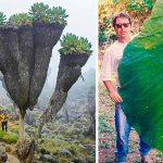 15 снимки, които ще те накарат да се почувстваш малък като мравка