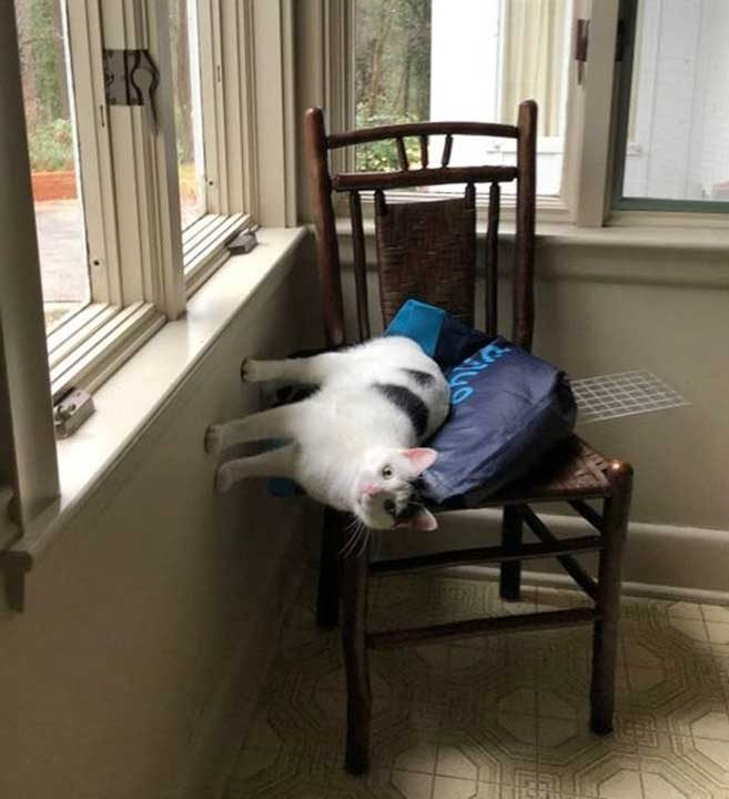 """""""Ето така почива котката ми днес на любимия си стол"""""""