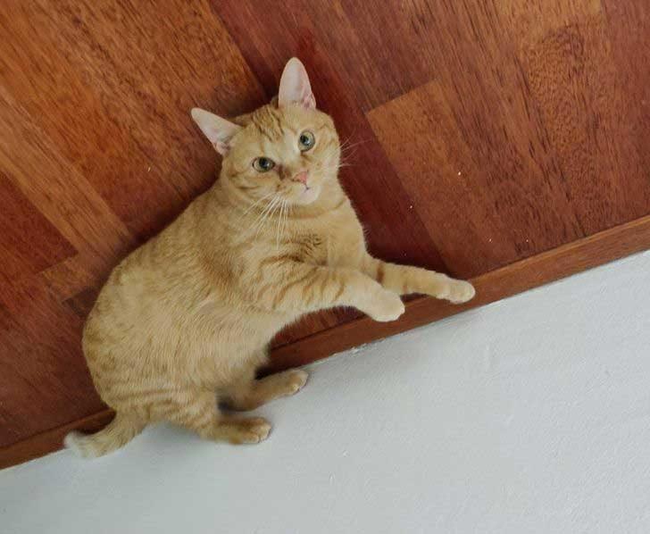 """""""Котката ми ходи по стената..."""""""