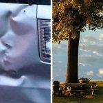 20 дезориентиращи снимки, които ще подведат съзнанието ти