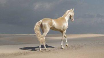 15 зашеметяващо красиви коне
