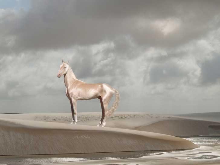 Акхал-текински кон