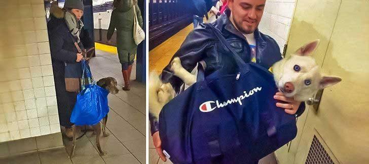 В метрото в Ню Йорк забранили да се возят кучета, освен ако не се побират в чанта. Ето какво последвало