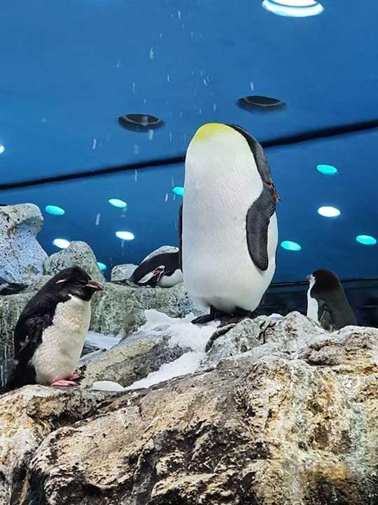 Пингвинът без глава