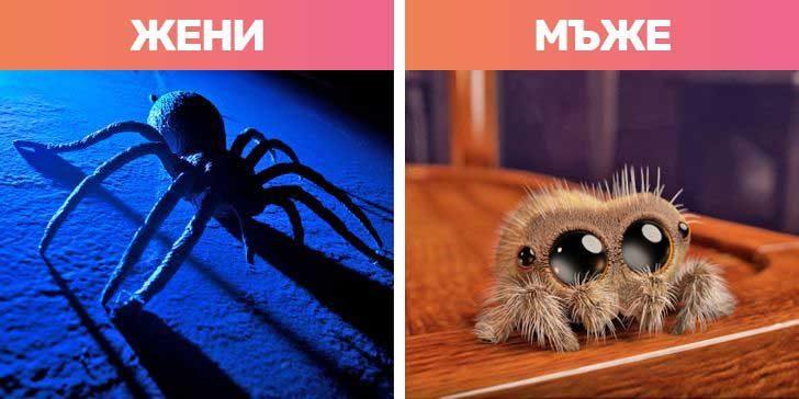 Как виждат паяците
