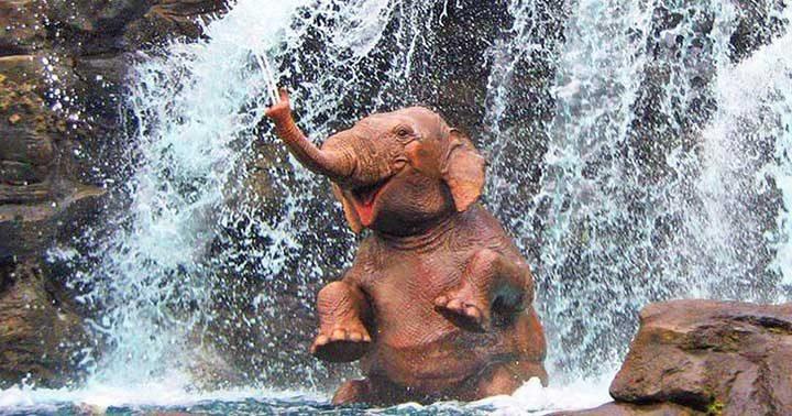 Слон в Хонг Конг Дисниленд