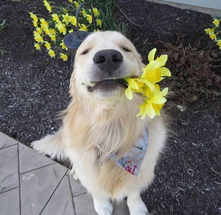 Това е Оукли. Той ти е избрал цветя. Надяваме се, че са в любимия ти цвят. Ако не, той може да опита отново