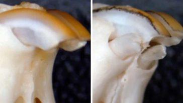 Учени откриха ново лекарство, регенериращо изгубени зъби