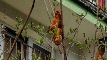 Опасно изглеждащ звяр на дървото се оказва най-обикновен кроасан