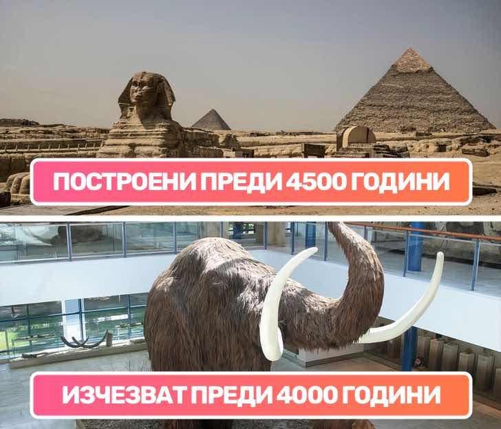 Вълнестите мамути все още са бродели по земята, когато египтяните са изграждали пирамидите в Гиза