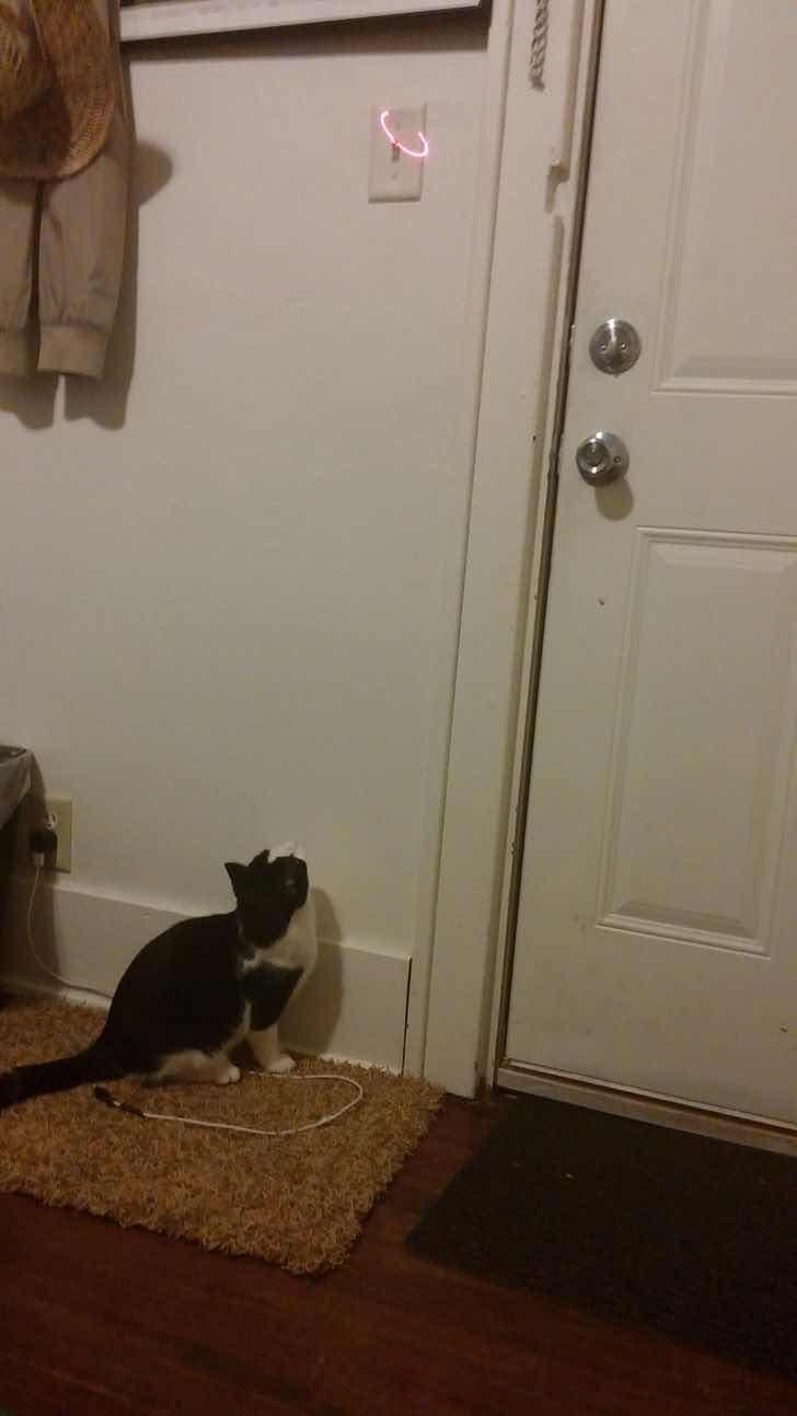 Как да накараш котката да свърши работата, когато не ти се става до ключа на лампата