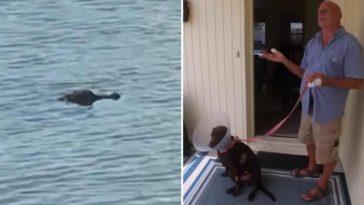 Мъж се пребори с алигатор, за да спаси кучето си
