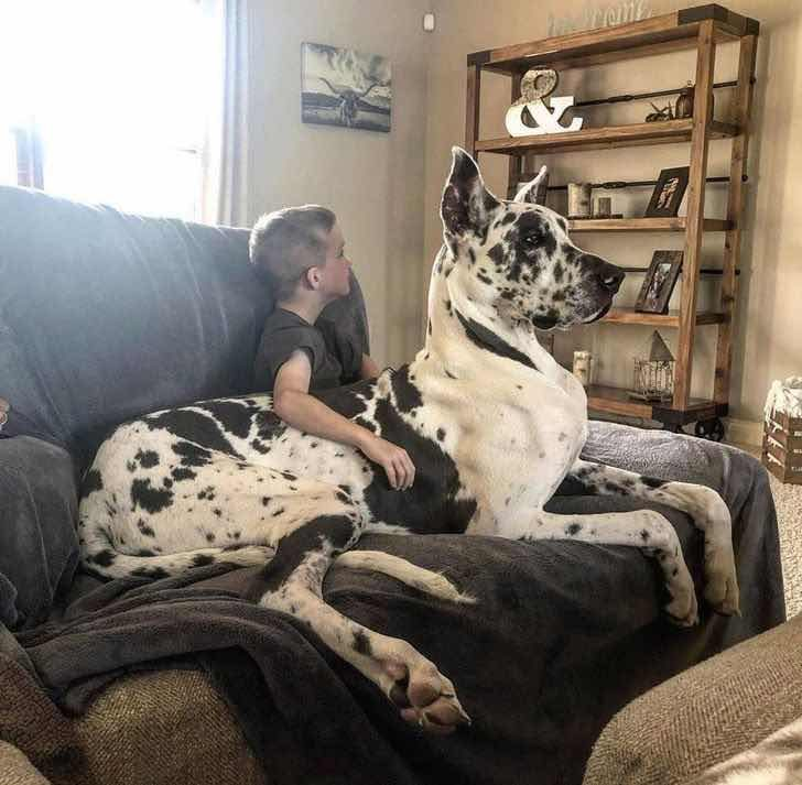 Веднъж кученце в скута, завинаги кученце в скута