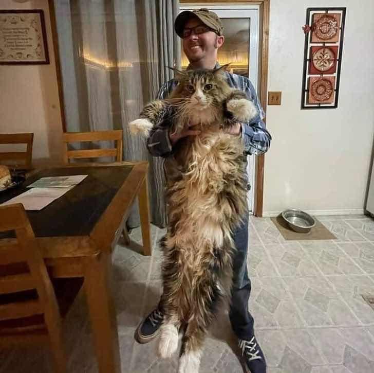 """""""Котката на моя приятел е почти толкова висока, колкото и той"""""""