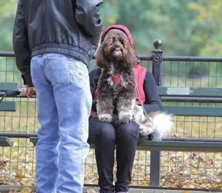 Когато кучетата стават хора