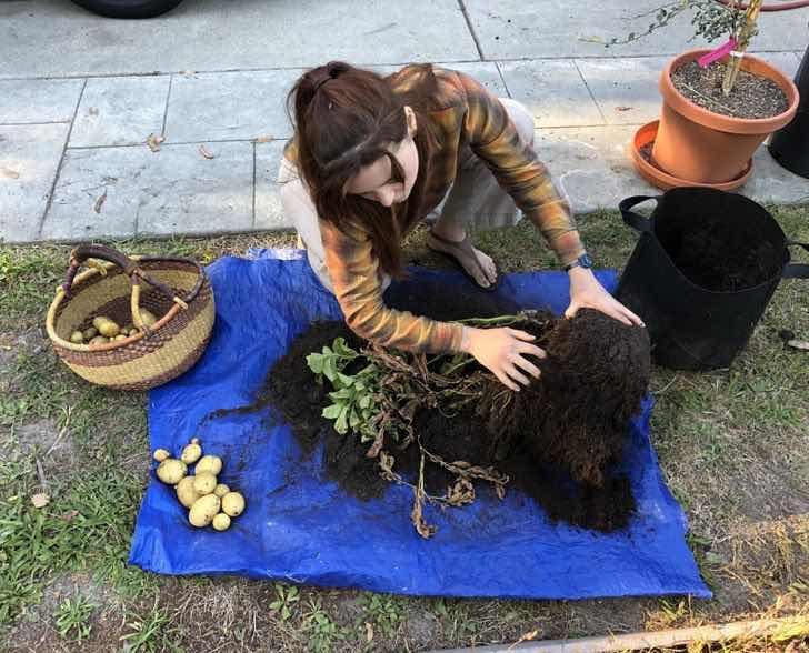 """""""На пръв поглед си помислих, че тя гали кучето си... Оказа се, че сади картофи"""""""