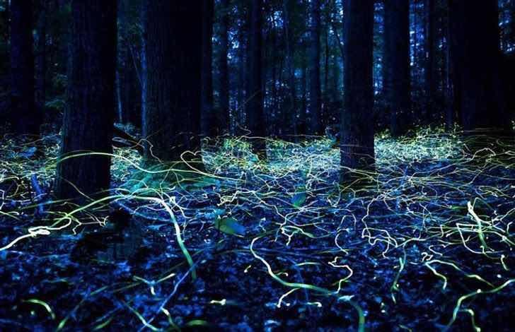 Светулки, снимани на дълга експозиция