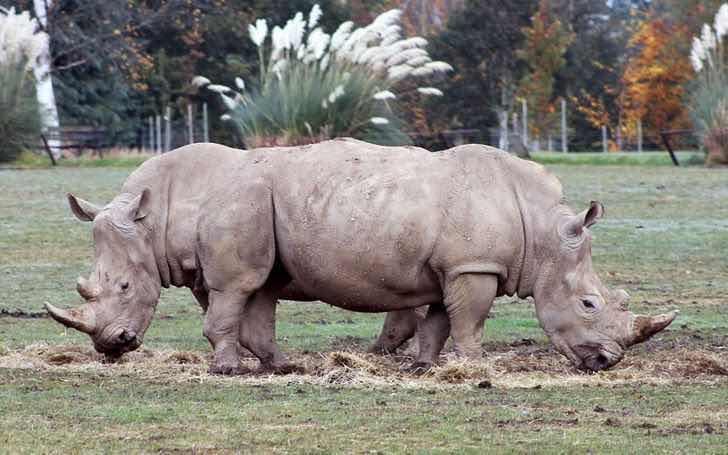 Носорози близнаци