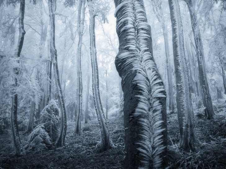 Тази гора прилича на чимен музей на модерното изкуство