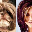 20 кучета, приличащи на известни лица от екрана